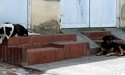 Canes al acecho en conjunto de Soacha