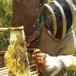 """Cundinamarca inicia piloto del programa: """"Abejas con la Conservación"""""""