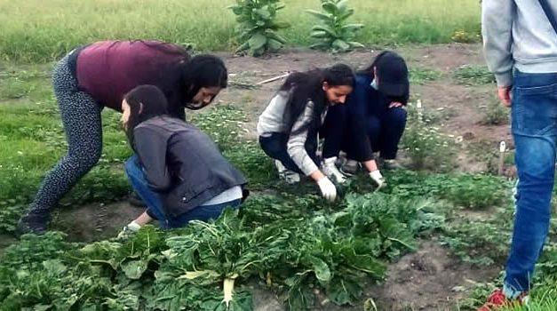 Organizaciones de Soacha recaudan fondos para fomentar la siembra orgánica
