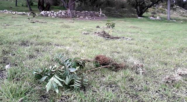 Alarma en Soacha por destrucción de árboles en humedal Chucuita