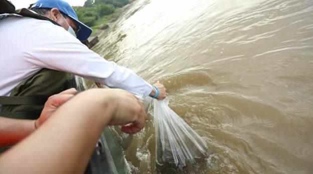 200 mil alevinos fueron liberados en el Río Magdalena para su repoblamiento