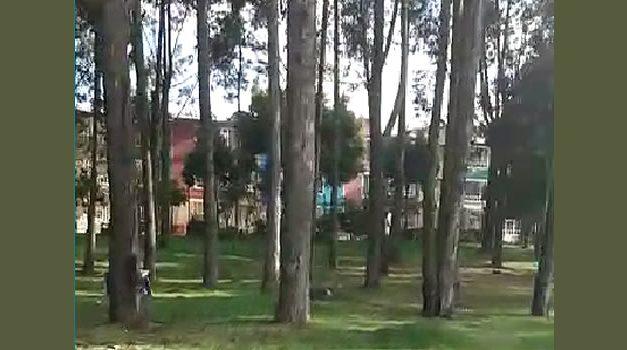 Funcionarios de la Alcaldía de Soacha sorprendieron a un grupo que hacía ejercicio, llegaron a tumbar los árboles