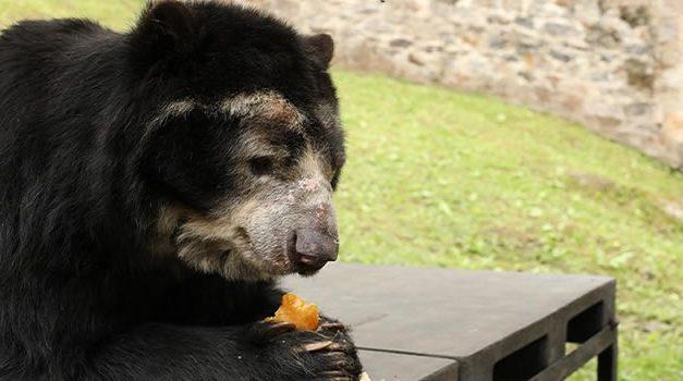 79 toneladas de alimentos para la fauna silvestre de bioparques y zoológicos de la región