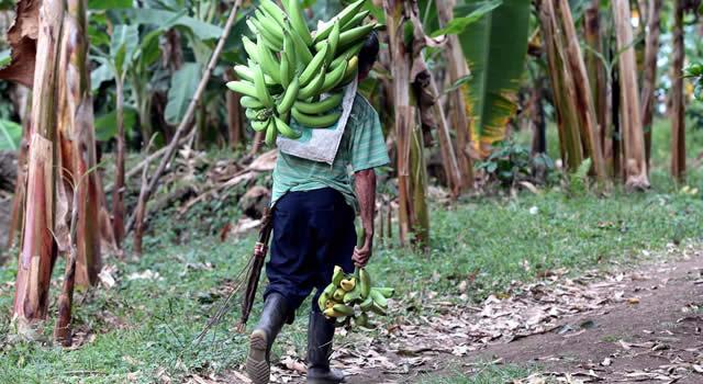 'Alianzas productivas para la vida' amplía plazo en Cundinamarca