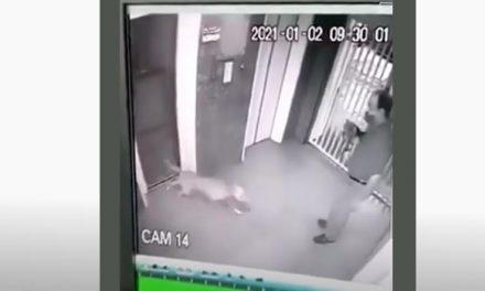 Cruel y despiadado ataque de un pitbull a un perro y su dueño