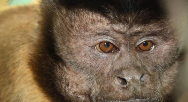 Bogotá avanza en la lucha contra el tráfico de especies
