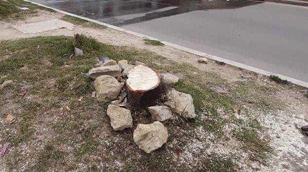 Denuncian tala de árboles en San Mateo, Soacha