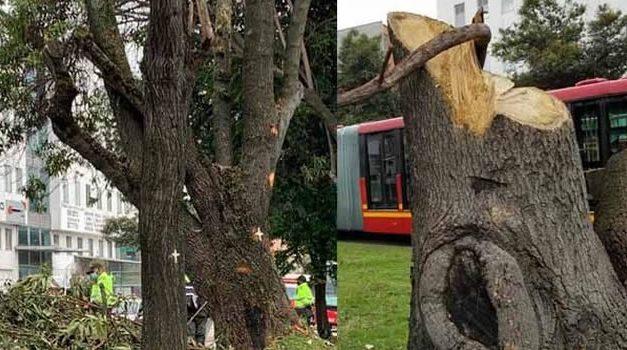 No paran las protestas en Bogotá por la tala de árboles en Suba