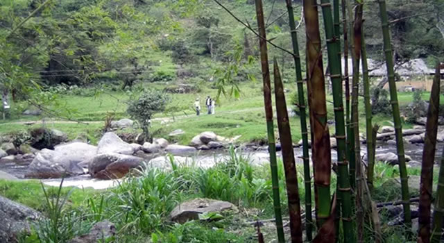 Región Andina solo conserva una tercera parte de bosque