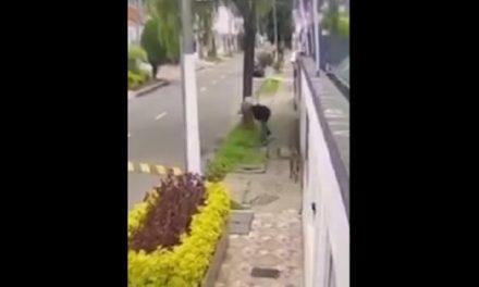[VIDEO] Brutal maltrato a una perrita en Bogotá