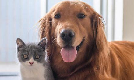 Esterilización y vacunación antirrábica para mascotas en Soacha