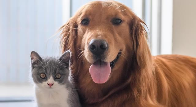 Vacunación masiva para mascotas en los 116 municipios de Cundinamarca