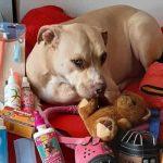 'Huellas Solidarias con Amor', 6 años trabajando por un trato digno a los animales de compañía en Soacha