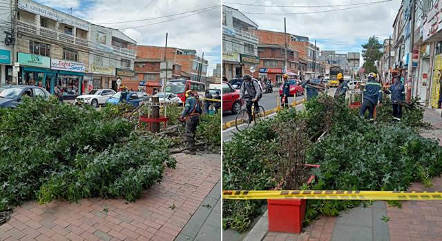 [VIDEO] Alcaldía de Soacha quiere acabar con los árboles de la Séptima