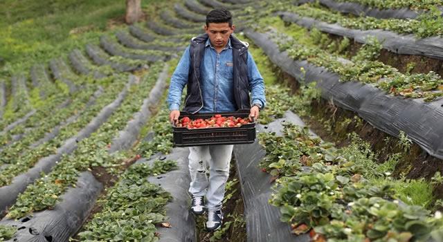 Cundinamarca abre convocatoria para emprendimientos juveniles por $1500 millones