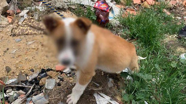 Denuncian repudiable caso de maltrato animal en Chía, Cundinamarca