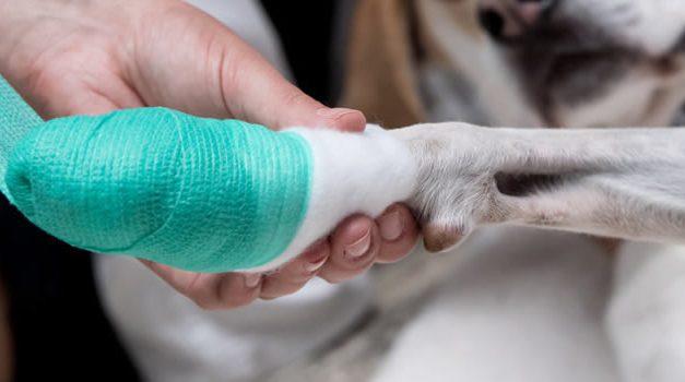 Condenan a hombre en Soacha por asesinar con arma blanca a un perro