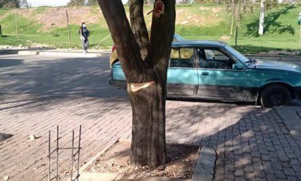 Denuncian daños y poda ilegal de árboles en Portal de la Hacienda, Soacha