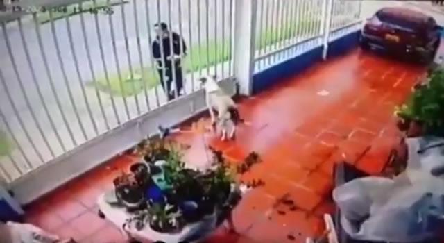 ¡Indignación! Hombre le habría arrojado ácido a un perro en Bogotá