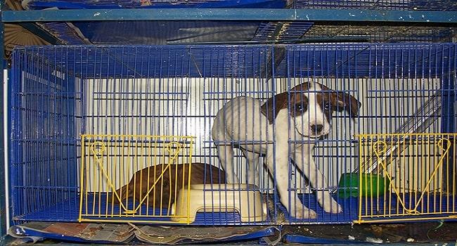 En las plazas de mercado de Bogotá ya no se venderán animales vivos